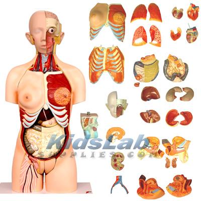 Human body sex parts